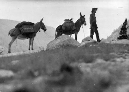 E leading 2 burros